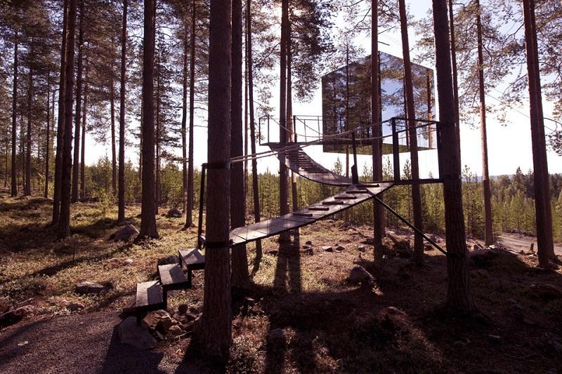 Sleep in a treetop