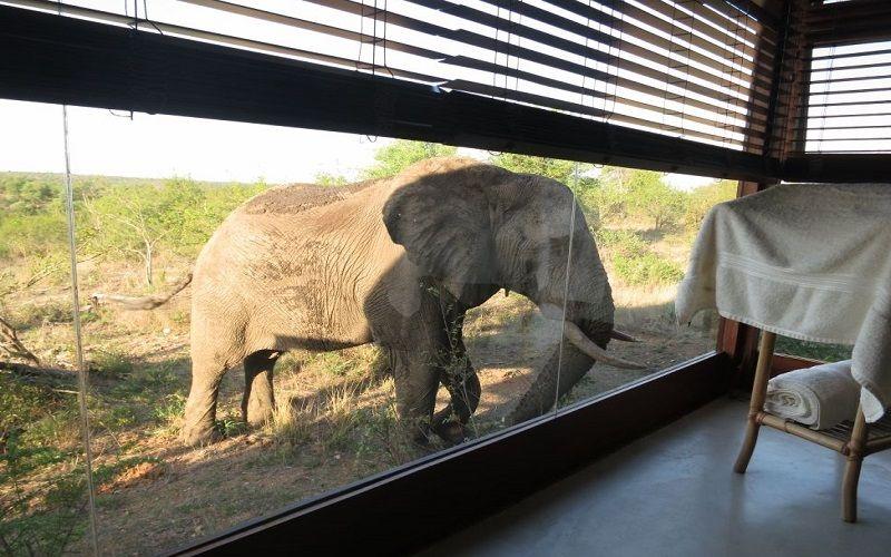 top Kruger National Park