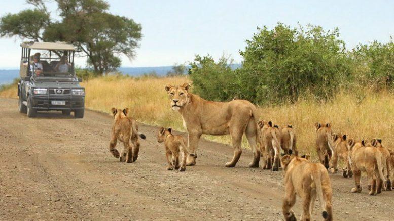 best Kruger National Park