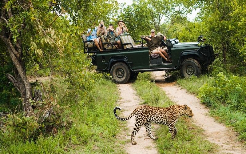 Southern Africa Signature Safari