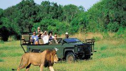 Signature Safari