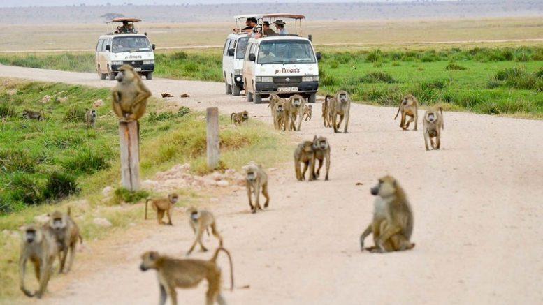 organize a safari