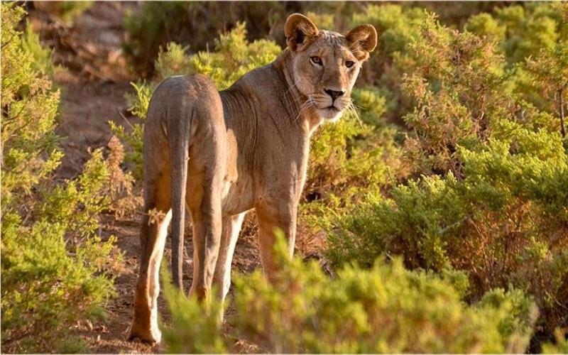 best organize a safari