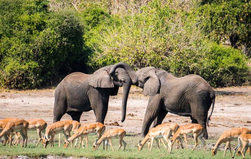 top Chobe National Park