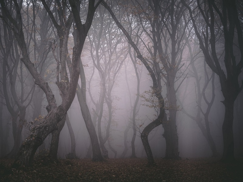 most scary forest in the world